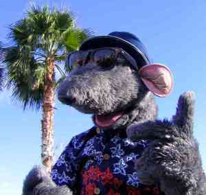 Roland Rat, Superstar. Yeahhhhh!